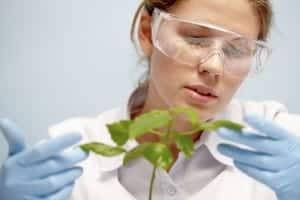 argronomist with plant